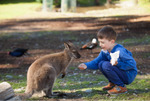Free Entry (Normally $12) for Children with a Paying Adult ($32.50) This Weekend @ Willowbank Wildlife Park Christchurch