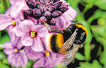 Win 1 of 2 Zonda Beneficials Bumblebee Hives from This NZ Life