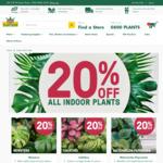 House Plants: Watermelon Peperomia 14cm - $39.99, Monstera Deliciosa 3.3l - $23.99 @ Kings Plant Barn