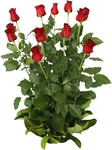 12 Red Roses - $19 at Bunnings