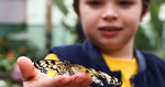 Win a Butterfly Creek Double Pass from Tots to Teens