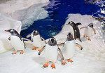 2 General Admissions (2 Adult or 2 Child) to SEA LIFE Kelly Tarlton's Auckland $39 (Normally $64 - $78) Via GrabOne